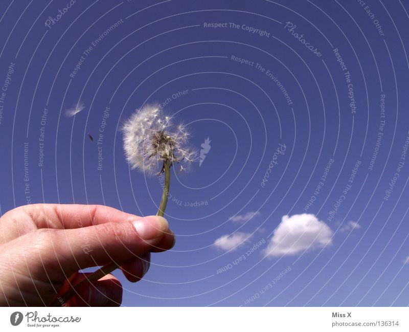 Da fliegt was Farbfoto Außenaufnahme Tag Freude Sommer Luftverkehr Hand Finger Himmel Wolken Blume fliegen verblüht blau weiß Löwenzahn blasen Abheben Daumen
