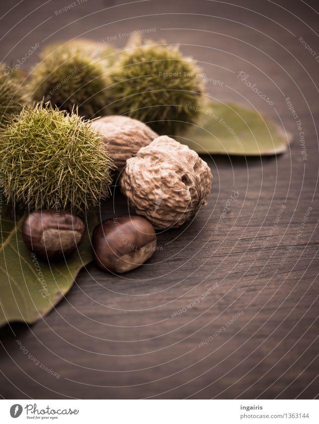 Herbstfrüchtchen 2 Pflanze Blatt Walnuss Nuss Schalenfrucht Frucht Maronen Holz Gesundheit lecker natürlich rund stachelig braun grün Baumfrucht Kastanie