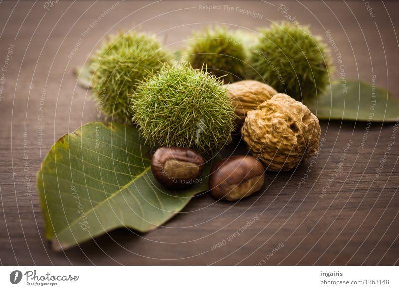 Herbstfrüchtchen Frucht Ernährung Pflanze Blatt Maronen Walnuss Nuss Schalenfrucht Holz lecker natürlich rund stachelig trocken braun grün Baumfrucht