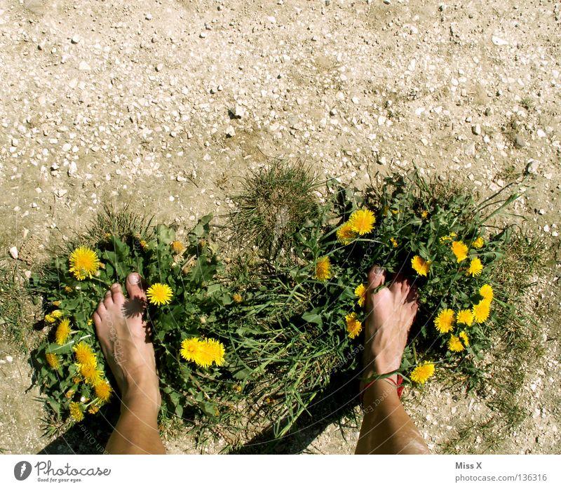 Öko-Latschen Farbfoto Außenaufnahme Insel Beine Fuß Erde Dürre Blume Gras Schuhe Stein dreckig trocken braun gelb grau grün erdig Kies Kieselsteine Staub