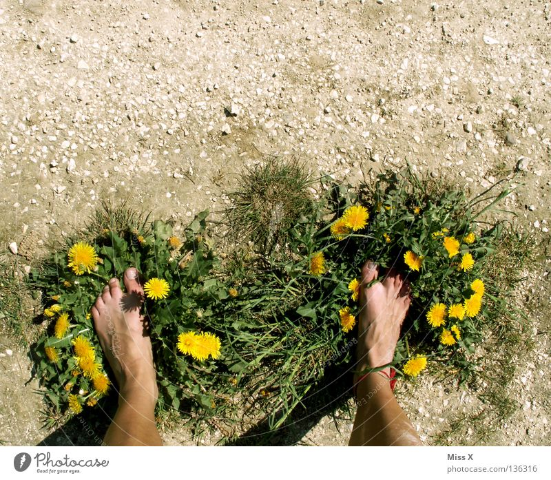 Öko-Latschen grün Blume Erwachsene gelb Gras grau Stein Beine Fuß braun Erde Schuhe dreckig Insel trocken Löwenzahn