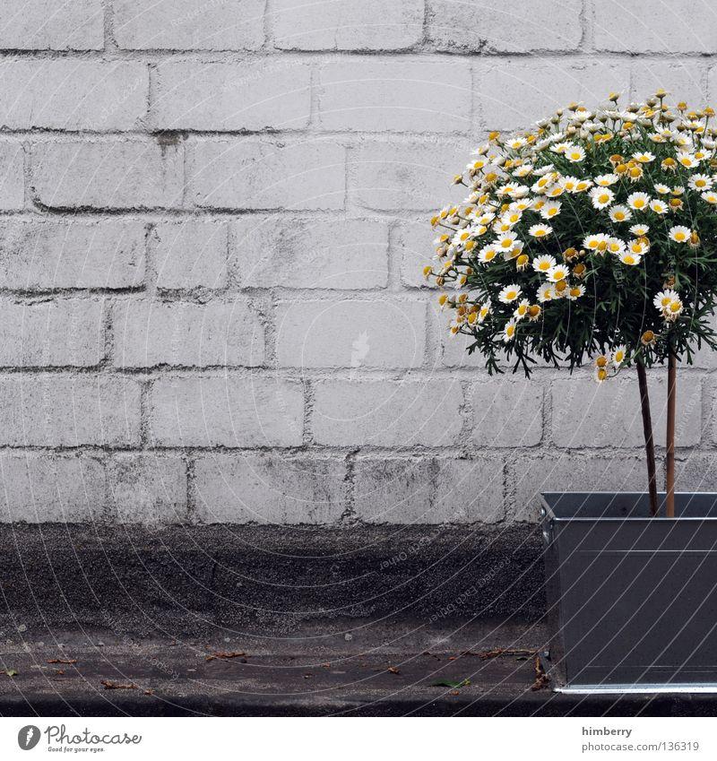 dekocase Baum Blume Farbe Straße Stein Stil Mauer Beton Dekoration & Verzierung Industrie Industriefotografie streichen Bauwerk Blumenstrauß