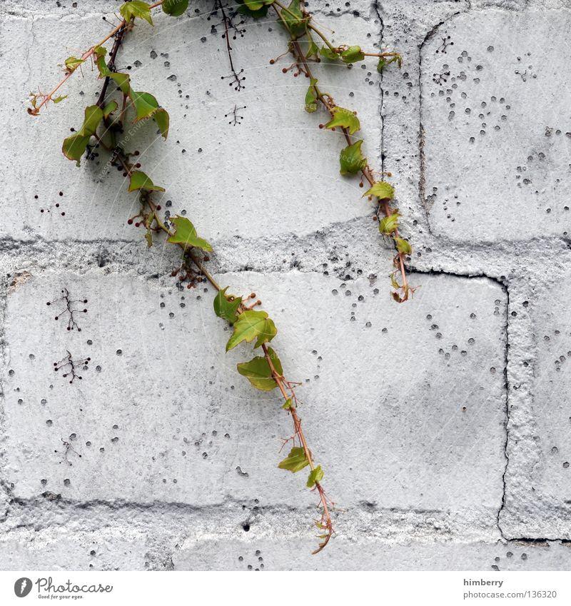 citylife Baum Blume Farbe Straße Stein Stil Farbstoff Mauer Beton Dekoration & Verzierung Industriefotografie streichen Bauwerk Blumenstrauß Fuge