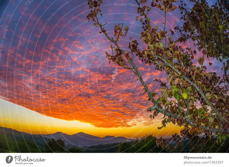 Birnbaum und Sonnenuntergang Umwelt Natur Landschaft Himmel Nachthimmel Sonnenaufgang Sonnenlicht Sommer Herbst Pflanze Baum Blatt Nutzpflanze Garten Wiese Feld