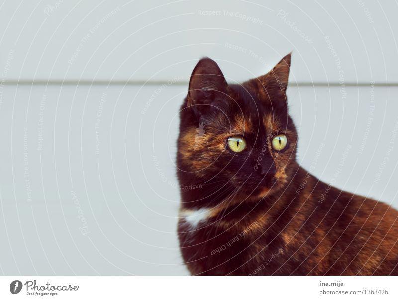 Kätzchen Katze Natur grün schön Tier schwarz Tierjunges Auge klein braun wild beobachten niedlich Neugier Fell Wachsamkeit