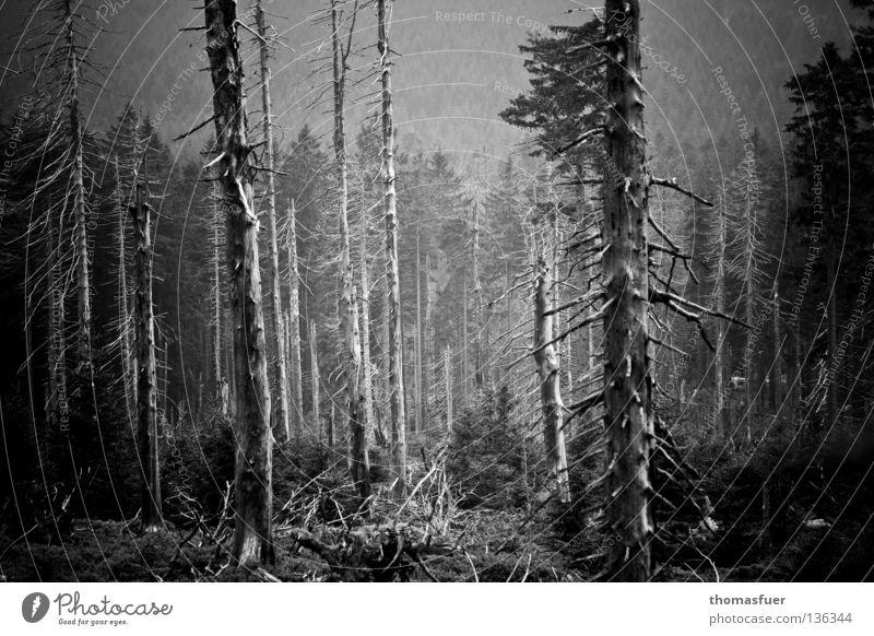 endlich wird Platz Baum Wald Waldsterben Umwelt Klimawandel Borkenkäfer Umweltkatastrophe Apokalypse Baugrundstück Energiekrise Zukunft Gegenwart