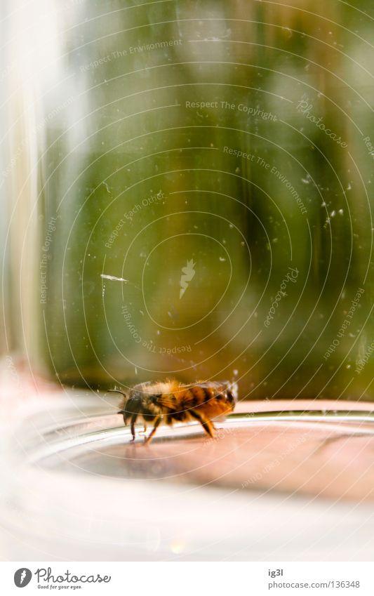 Isolation Natur grün Einsamkeit Tier dunkel Gefühle Tod fliegen Angst Kraft Lebensfreude Lebewesen Trauer festhalten Insekt Wut