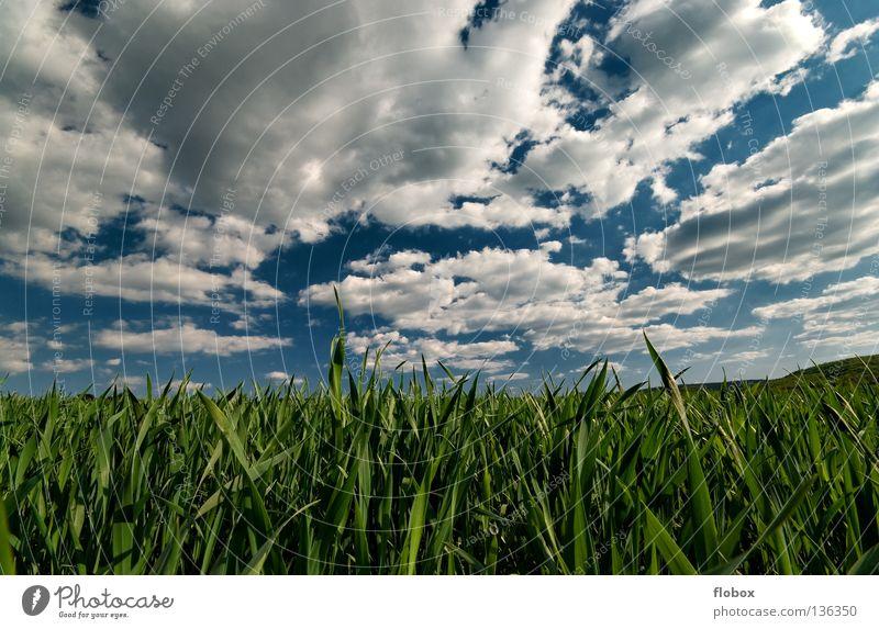 Wolkenbehangen Wolkenfeld Feld Ackerbau Wolkenformation Wolkenfetzen Wolkenhimmel Panorama (Aussicht) grün weiß himmelblau Natur Landschaft