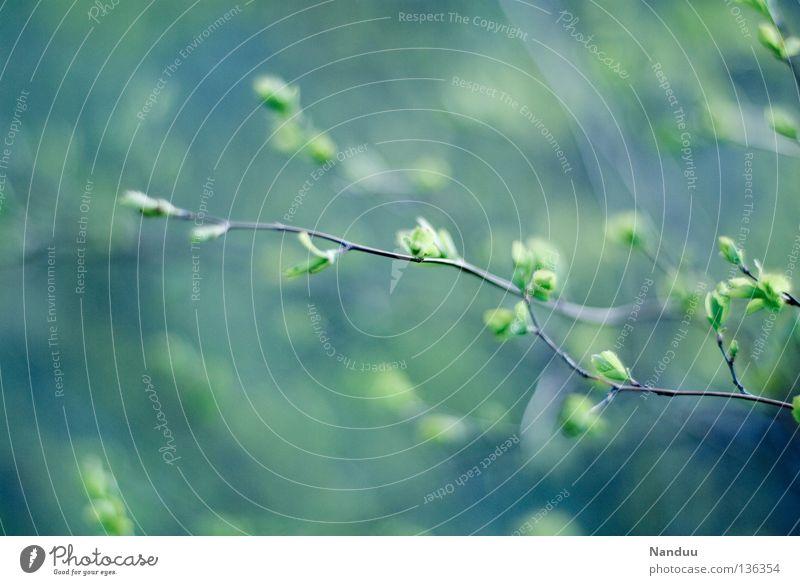 sanft-kühl Natur Baum Pflanze kalt Frühling Park Wachstum Sträucher Ast zart Tiefenschärfe Blütenknospen sanft Reifezeit Offenblende