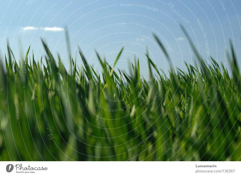Bitte nicht drängeln schön ruhig Natur Pflanze Himmel Wolken Frühling Wetter Schönes Wetter Gras Feld Wachstum Freundlichkeit frisch neu saftig viele weich