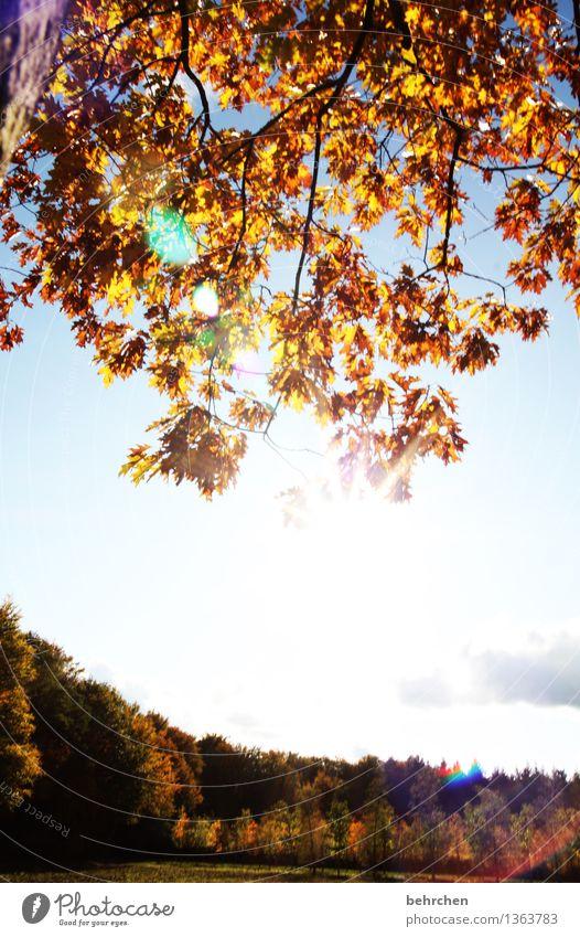 es herbstelt... Natur Pflanze Himmel Wolken Herbst Schönes Wetter Baum Blatt Wiese Feld Wald genießen wandern schön Wärme herbstlich Zweige u. Äste Spaziergang