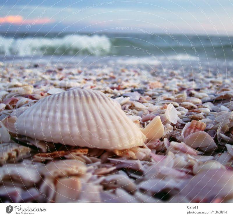 Relax!!! Lifestyle Stil Zufriedenheit ruhig Meditation Schwimmen & Baden Ferien & Urlaub & Reisen Sommer Sonne Sonnenbad Strand Meer Wellen Wassersport Kitsch