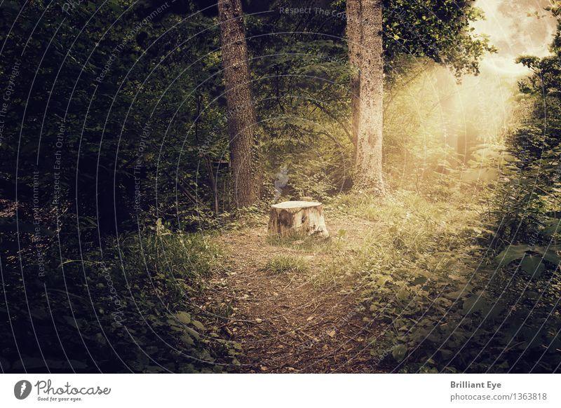 Mystischer Wald Natur Baum dunkel kalt Umwelt Beleuchtung außergewöhnlich Stimmung hell Nebel Angst leuchten Idylle Sträucher gefährlich
