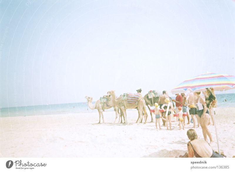 aufsteigende Gerade (mit Kamelen) Dromedar Tier Sonnenschirm Nordseeküste See Meer Strand Ferien & Urlaub & Reisen Sonnenbad heizen Tourist Physik heiß Afrika