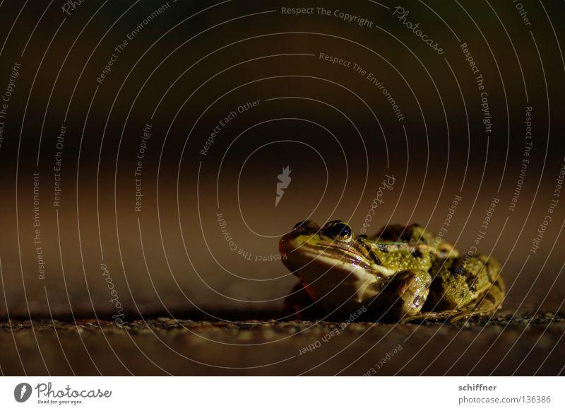 Na los - küss mich! grün Mund Küssen Frosch Märchen Teer Straßenverkehr hüpfen hocken Krone Froschlurche Lurch Laubfrosch Traumprinz Kröte Froschschenkel