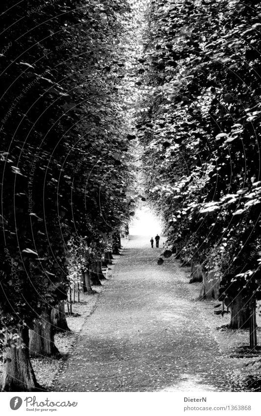 Zwei Mensch Kind Mann weiß Baum schwarz Erwachsene Wege & Pfade grau Park Allee