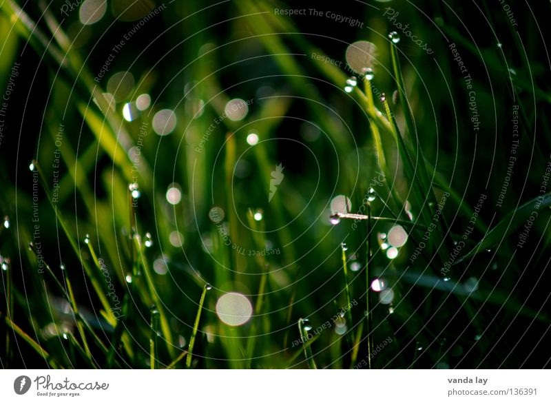 Green green gras of home Gras grün frisch dunkel Lichtpunkt Wiese Frühling Makroaufnahme Nahaufnahme Punkt dot Seil Wassertropfen fresh Natur
