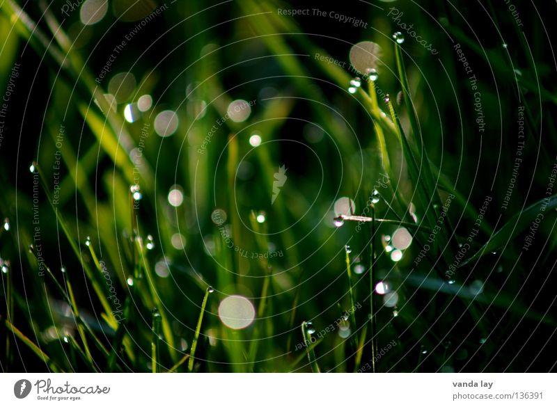 Green green gras of home Natur grün dunkel Wiese Gras Frühling Wassertropfen Seil frisch Punkt Lichtpunkt