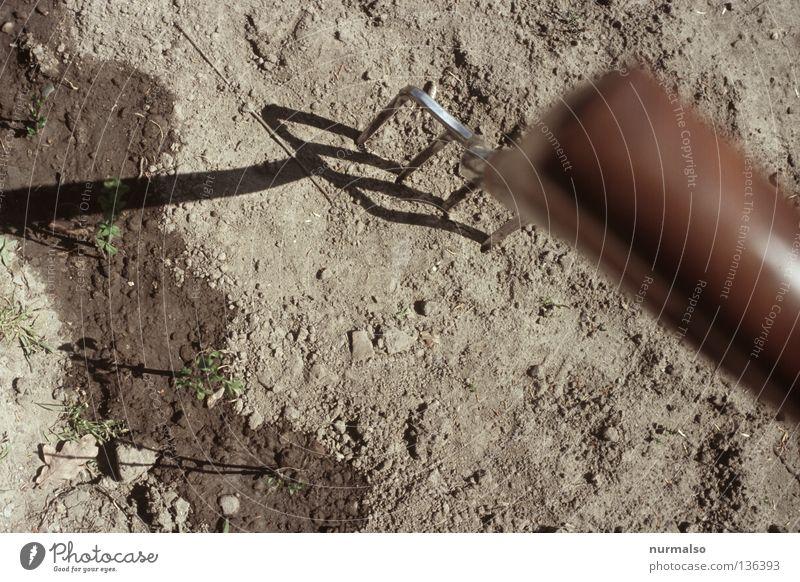 Erdnadel Natur Pflanze Ernährung Garten Erde Wohnung Boden Spitze Sauberkeit Landwirtschaft Gemüse Stengel trendy ökologisch Eisen Ackerbau