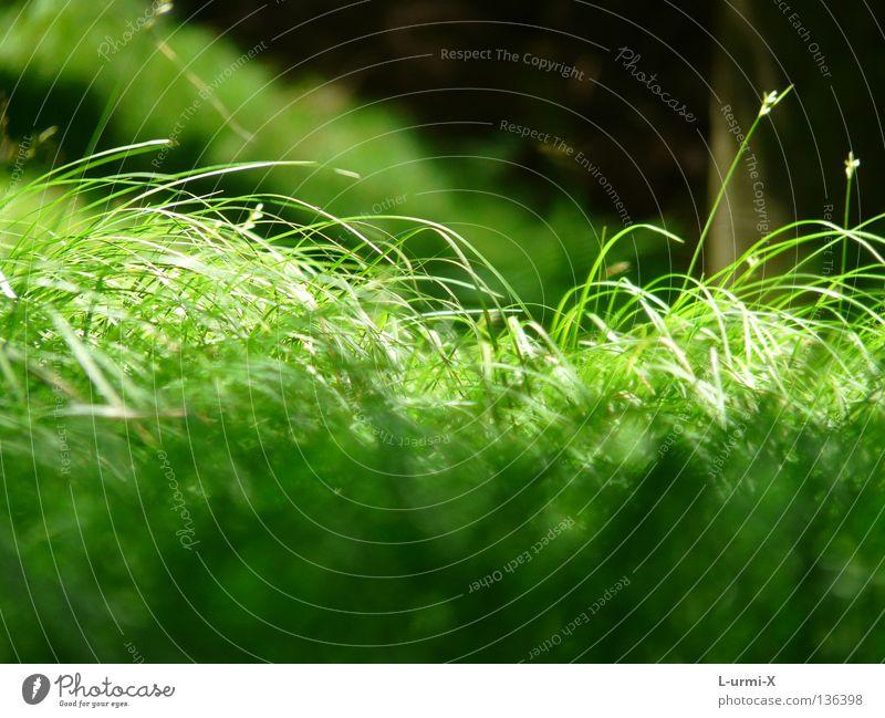 green green grass of home grün Wiese springen Gras Frühling