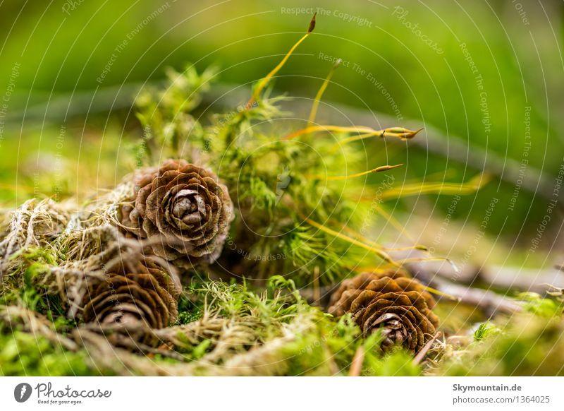Arrangement Umwelt Natur Pflanze Tier Wetter Schönes Wetter schlechtes Wetter Moos Garten Park Wiese Feld Wald Hügel Felsen Alpen Berge u. Gebirge braun gelb