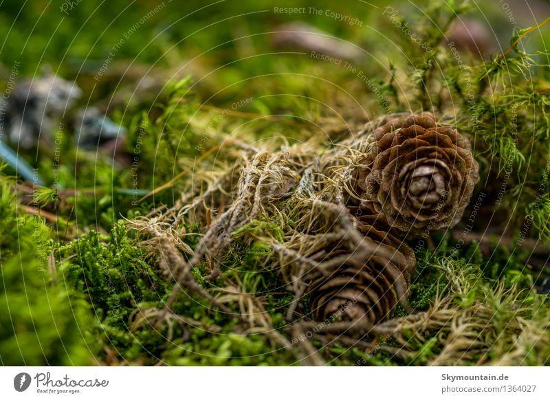 Oh zapft is! Umwelt Natur Landschaft Pflanze Tier Frühling Sommer Herbst Klima Klimawandel Wetter Schönes Wetter Moos Garten Park Wiese Feld Wald Urwald braun