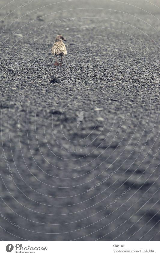 Ich mach dann mal die Möwe! Strand Island Vogel Spuren beobachten laufen Blick Coolness Wachsamkeit Gelassenheit Selbstbeherrschung Neugier Angst Misstrauen