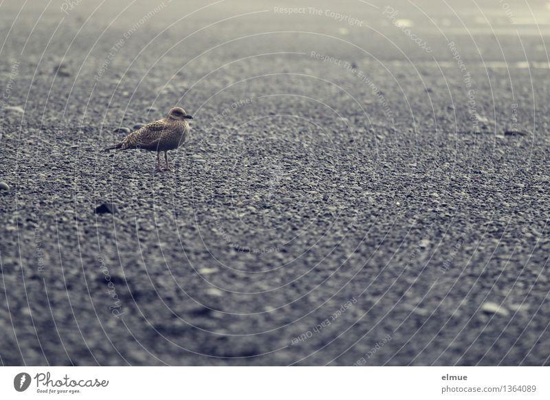 Kommt noch was? Natur Einsamkeit ruhig Strand Wege & Pfade Freiheit Vogel Angst stehen warten Kommunizieren beobachten Abenteuer Neugier Kontakt Wachsamkeit