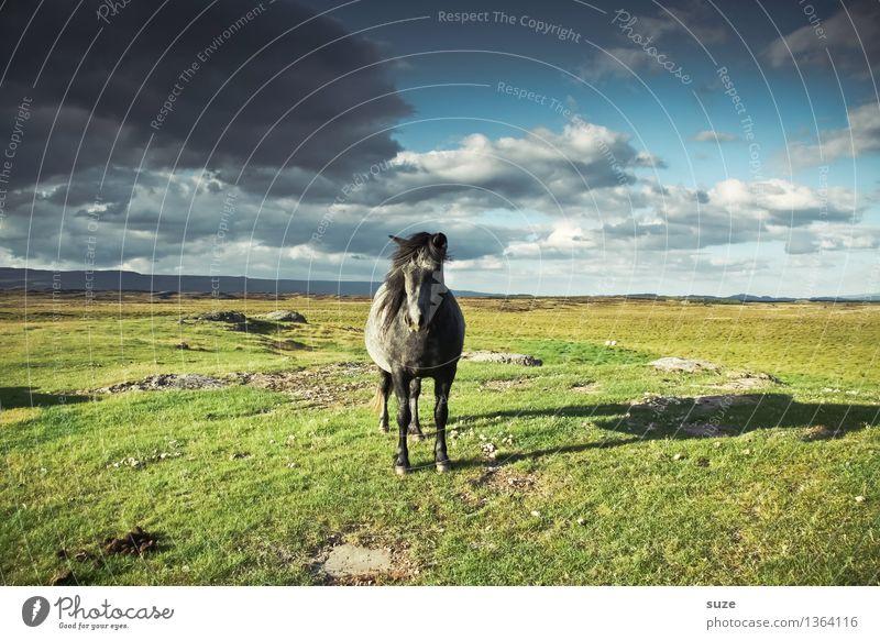Fährt nicht mehr - steht. Freiheit Natur Landschaft Tier Himmel Wolken Gewitterwolken Horizont Sommer Schönes Wetter Wiese Nutztier Wildtier Pferd 1 stehen