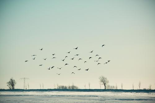 Kalt | nichts wie weg! Himmel Natur blau Baum Landschaft Tier Ferne Winter kalt Umwelt Traurigkeit Bewegung Schnee Freiheit fliegen Vogel