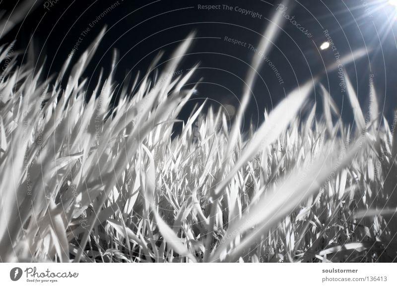 Frühlingserwachen IR Infrarotaufnahme Wiese Personenzug Farbinfrarot fremd Gras Löwenzahn Gegenlicht Reflexion & Spiegelung weiß schwarz Halm Sauerstoff