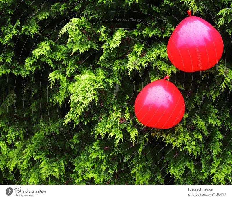 Die Kirschen sind reif grün rot Sommer Garten Park Regen Feste & Feiern Herz nass fliegen Geburtstag Wassertropfen Dekoration & Verzierung Luftballon hängen Hecke