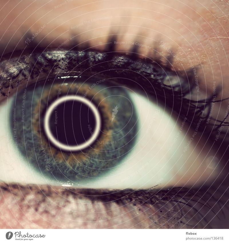 Schwesterchen II Pupille Wimpern Mensch Sinnesorgane Schminke geschminkt Wimperntusche Lidschatten Frau feminin schön Kosmetik betonen Licht Sommersprossen
