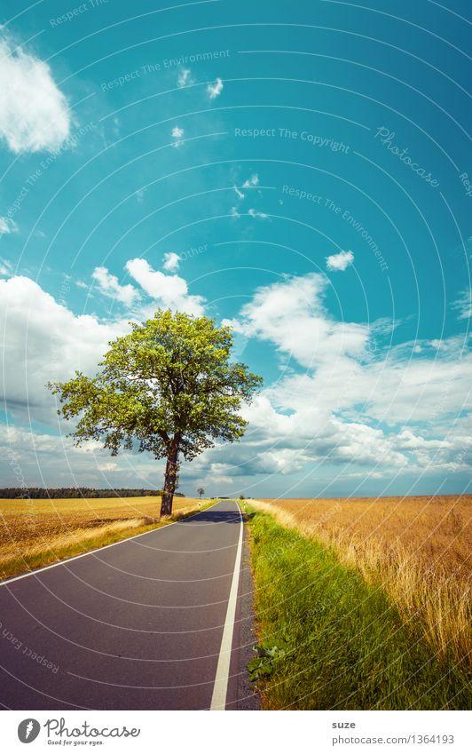Dem Sommer hinterher Umwelt Natur Landschaft Pflanze Himmel Wolken Horizont Herbst Wetter Schönes Wetter Baum Wiese Feld Verkehr Verkehrswege Straße