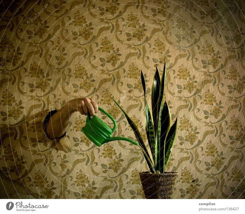 Der Pflanzenfreund Wasser Blume Einsamkeit Innenarchitektur träumen Raum Wohnung Arme Häusliches Leben retro Kreativität Tapete Dienstleistungsgewerbe skurril