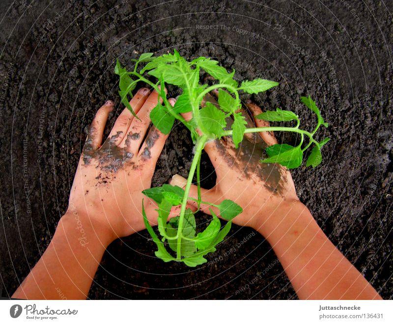Verantwortung Natur Hand grün Pflanze Frühling klein Garten Erde Kraft Freizeit & Hobby dreckig sitzen Finger Wachstum Arbeit & Erwerbstätigkeit
