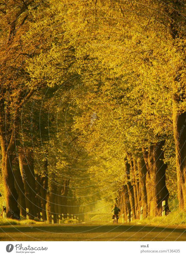 unter kronen radeln Baum Baumkrone Allee aufgereiht Fahrrad Blatt Geäst Stimmung Verkehrswege Reihe Natur Straße Niveau Ast Linie Kurve Fahrradfahren
