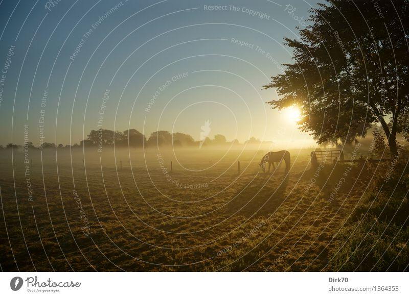 Weites Land ... Umwelt Natur Landschaft Wolkenloser Himmel Sonne Sonnenaufgang Sonnenuntergang Sonnenlicht Herbst Schönes Wetter Baum Gras Wiese Weide Tier