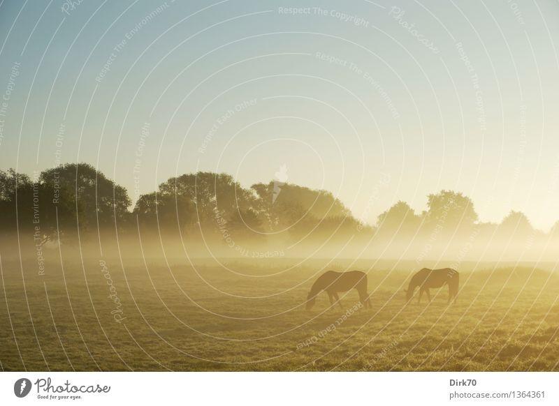 Schemenhaft Sommer Baum Landschaft ruhig Tier Ferne Wärme Herbst Wiese Essen Gras natürlich Nebel frei Tierpaar Klima