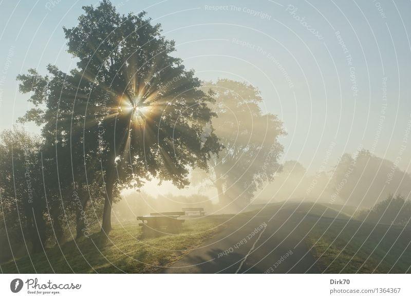 The Light Fantastic Ausflug wandern Natur Landschaft Wolkenloser Himmel Sonne Sonnenlicht Herbst Schönes Wetter Nebel Baum Gras Wiese Deich Straße Wege & Pfade