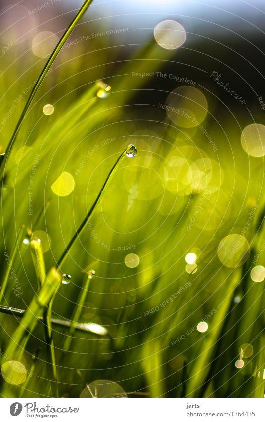 grün mit tropfen Pflanze Wassertropfen Schönes Wetter Gras Flüssigkeit frisch hell schön nass natürlich Natur Vergänglichkeit Farbfoto Außenaufnahme Nahaufnahme