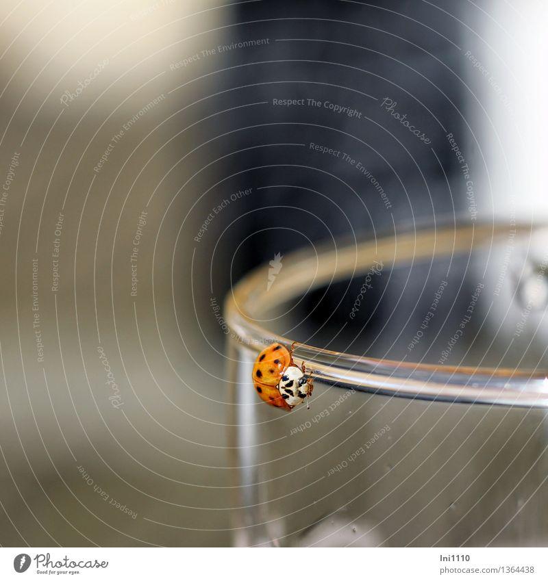 Marienkäfer schön weiß Sonne Tier schwarz gelb Leben Wärme Herbst natürlich Glück Garten braun Park orange Wildtier