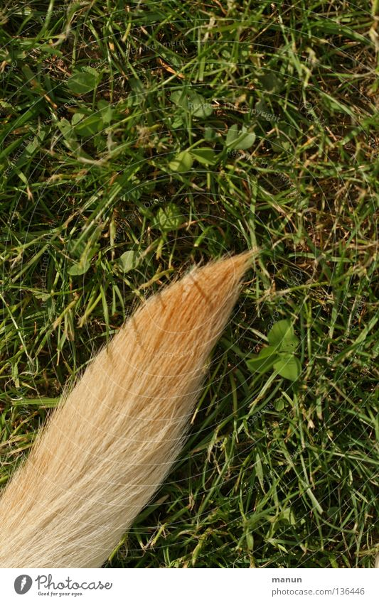 Ein Stück Hund III Natur grün Sommer ruhig Blatt Tier gelb Wiese Gras Frühling Garten Haare & Frisuren blond Spitze Fell