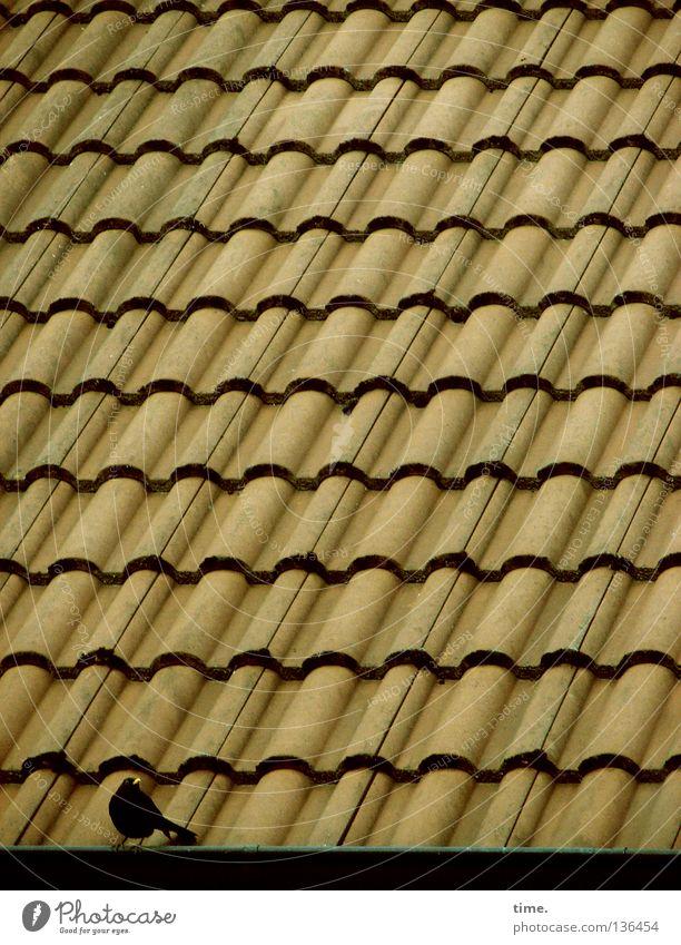 Abgesagte Party Einsamkeit Vogel sitzen Kommunizieren Dach Schutz Konzentration Backstein diagonal singen Symmetrie parallel Orientierung Dachziegel Dachrinne