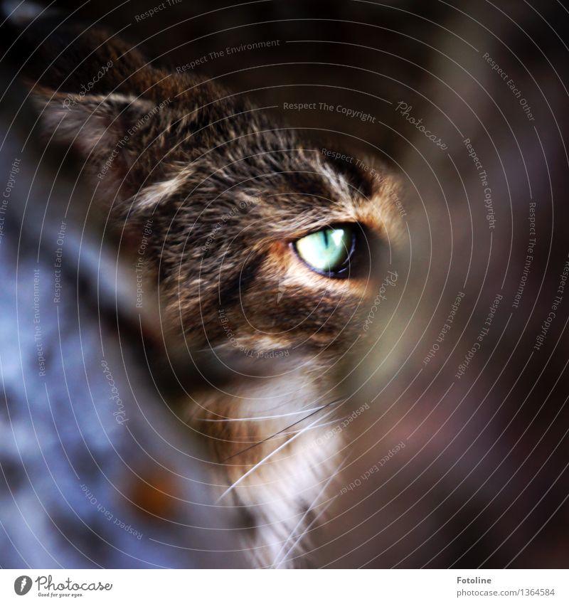 beobachtet Tier Haustier Katze Tiergesicht Fell 1 natürlich Neugier braun grün weiß Hauskatze Blick beobachten Versteck Schnurrhaar Farbfoto Außenaufnahme