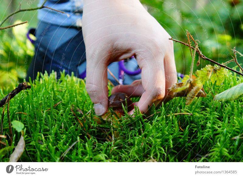 Hab dich! Mensch Haut Hand Finger Umwelt Natur Pflanze Herbst Schönes Wetter Moos Wald hell natürlich braun grün greifen pflücken Ernte Schuhe Farbfoto