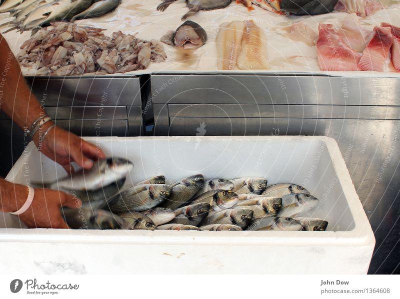 Frischer Fisch Mensch Ferien & Urlaub & Reisen Hand Essen Arbeit & Erwerbstätigkeit frisch authentisch Ernährung mediterran Handel Angeln Glätte
