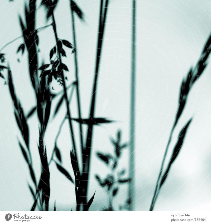 an einem regentag Himmel Wetter schlechtes Wetter Wind Gewitter Gras Bewegung Traurigkeit nah grau Trauer Ende Vergänglichkeit dezent Halm Mitte trüb Stengel
