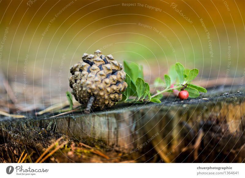 Herbst T i m e . . . wandern Natur Erde Schönes Wetter Pflanze Baum Gras Sträucher Moos Grünpflanze Wiese Wald Berge u. Gebirge entdecken Gesundheit natürlich