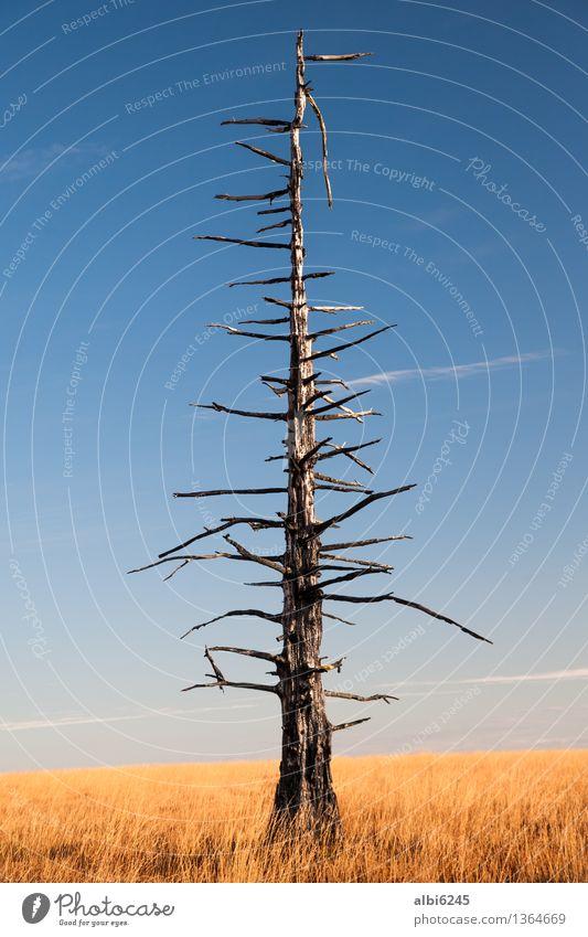 Verkohlter Baum Himmel Natur blau nackt Landschaft Umwelt gelb Wärme Traurigkeit Herbst Tod Erde ästhetisch Klima Feuer